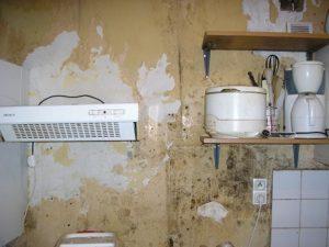 Moisissures sur le placoplatre d'un mur humide par infiltration d'eau à tourcoing