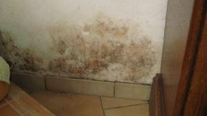 bas de mur humide avec moisissures sur un mur ayant des remontées capillaires près de lille