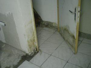 L'inondation de la cave a abimé la porte et les murs en placoplatres de l'escalier. Des moisissures apparaissent de plus en plus dans la cave