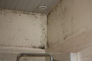 nettoyer moisissure sur un mur humide dans une maison humide