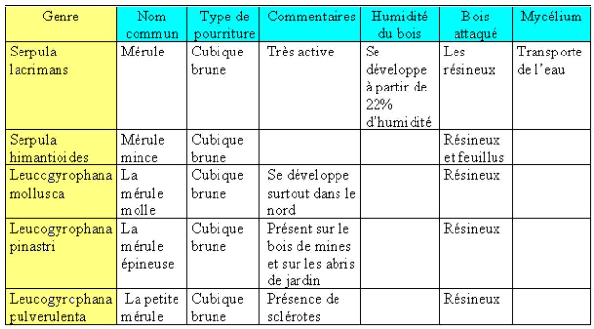 eliminer_merule_ reconnaitre_traiter_traitement_la_merule