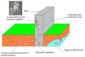 comprendre les remontées d'eau dans le mur humide ou remontée capillaire