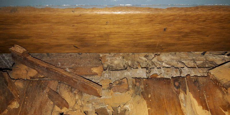 LE mérule attaque le bois et le rend cassant. Attention à la sécurité à cause du mérule sur les structures bois