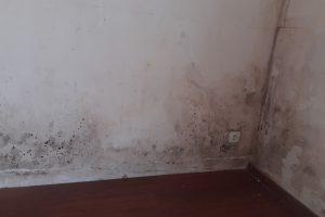 éliminer les moisissures dans un logement humide et trouver le traitement contre l'humidité pour sécher les murs moisis