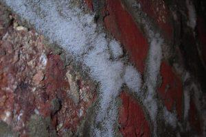 masse type coton blanc sur mo mur humide de cave