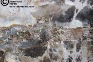 Mousse blnche sur du bois dans une cave : mérule. Le mérule est un champignon dangereux pour la maison car il mange la cellulose du bois. Le bois s'abime en pourriture cubique. LE bois casse et n'ai plus résistant. Le plancher s'effondre à cause du mérule.