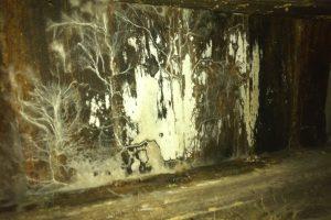 Mérule ou moisissure, photo pour déterminer la mérule