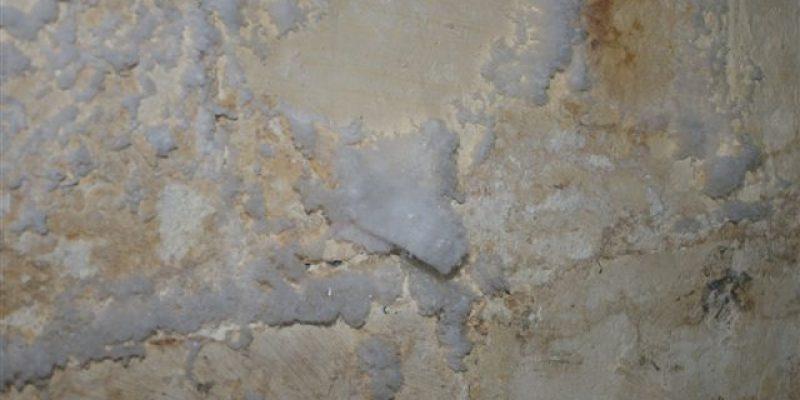 repérer le salpetre et la mérule. les sels minéraux sont des filaments blancs luisants sur les murs et les caves