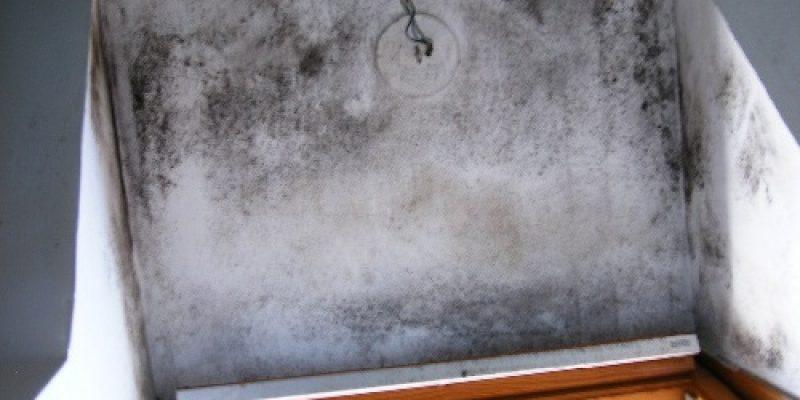 Les moisissures se développent autour de la fenêtre : choc thermique et humidité