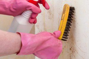 moisissure sur les murs d'une maison, comment nettoyer et retirer l'humidité