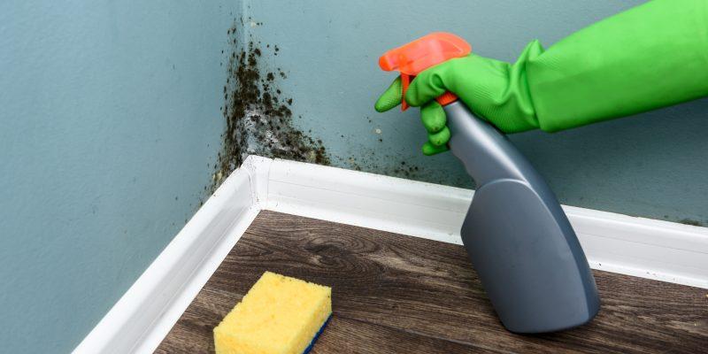 Les moisissures sur le mur doivent être éliminer pour votre santé. Comment nettoyer les murs moisis.